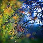 Autumn Breeze SQ