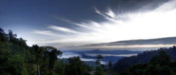 Borneo Rain Forest 2